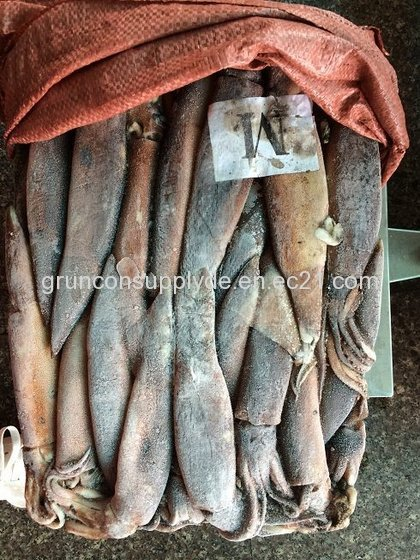 Argentina Illex Squid,Dried Squid ,Frozen Squid for Sale