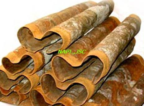 Sell Cassia - Cinnamon High Quality and Best price from VIETNAM