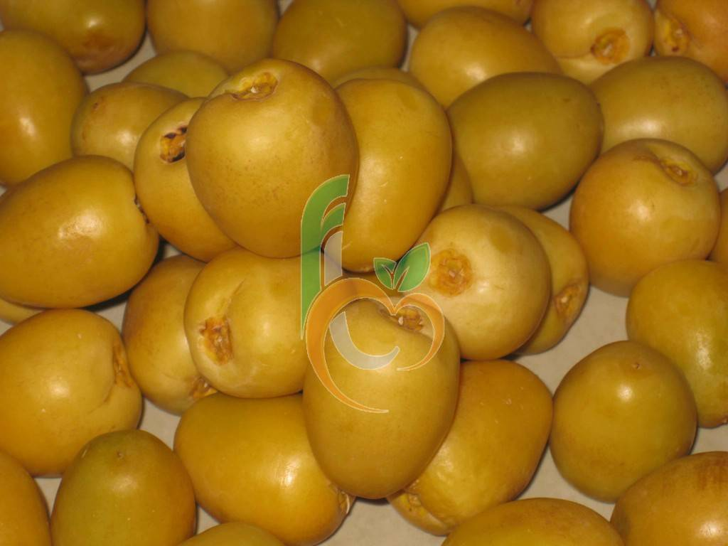 Egyptian fresh barhi by fruit link