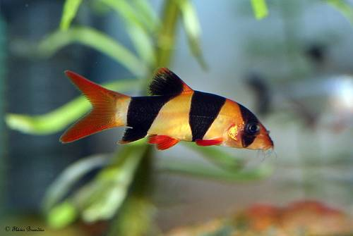 Tropical Fish Wholesaler from Indonesia