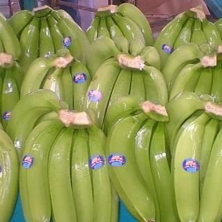 Fresh Bananas for sale