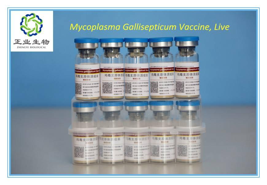 Mycoplasma Gallisepticum Vaccine, Live.