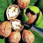 walnut seed oil