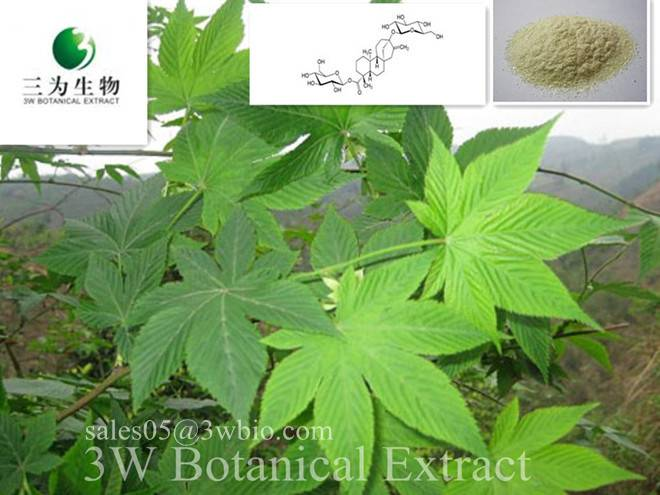 Sweet tea Leaf Extract(sales05 AT 3wbio DOT com)