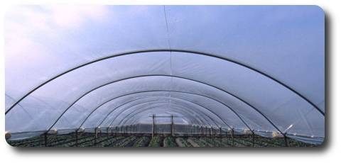 Greenhouse films and other films for agriculture