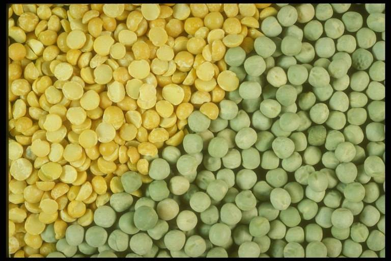 Peas yellow or green from Ukraine