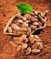 Arabica Coffee Bean Organic Price Best High Quality