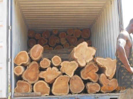 A grade okoume wood logs for sale.