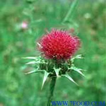 Tribulus terrestris fruit extract saponins 40-90%