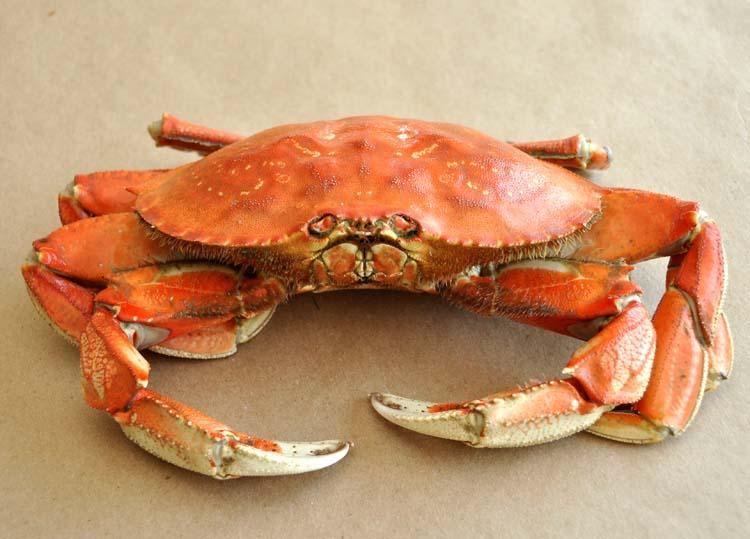 Live Crab, Frozen Crab, Frozen King Crabs, Frozen Crab Legs