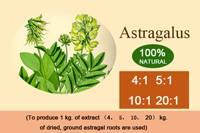 Astragalus P. E.