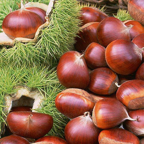 Fresh Chestnuts and Frozen Peeled Chestnuts