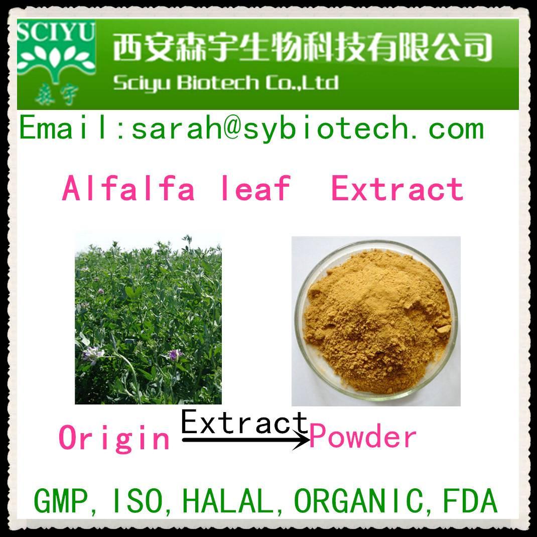Alfalfa leaf organic powder