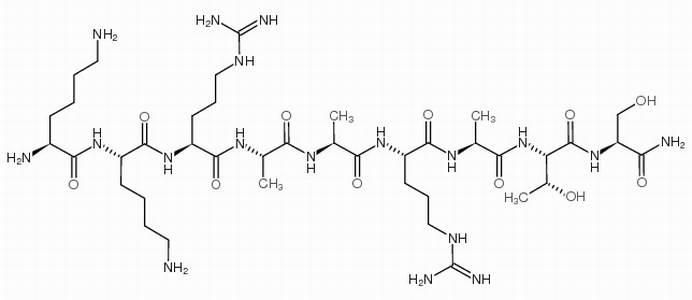 Myosin Kinase Inhibiting Peptide
