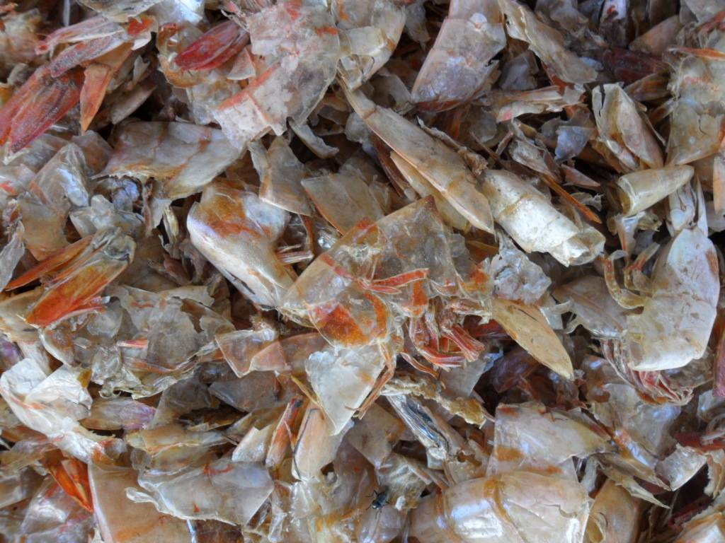 dry shrimp shells without head 100% for make chitin,chitosan,glucosamine