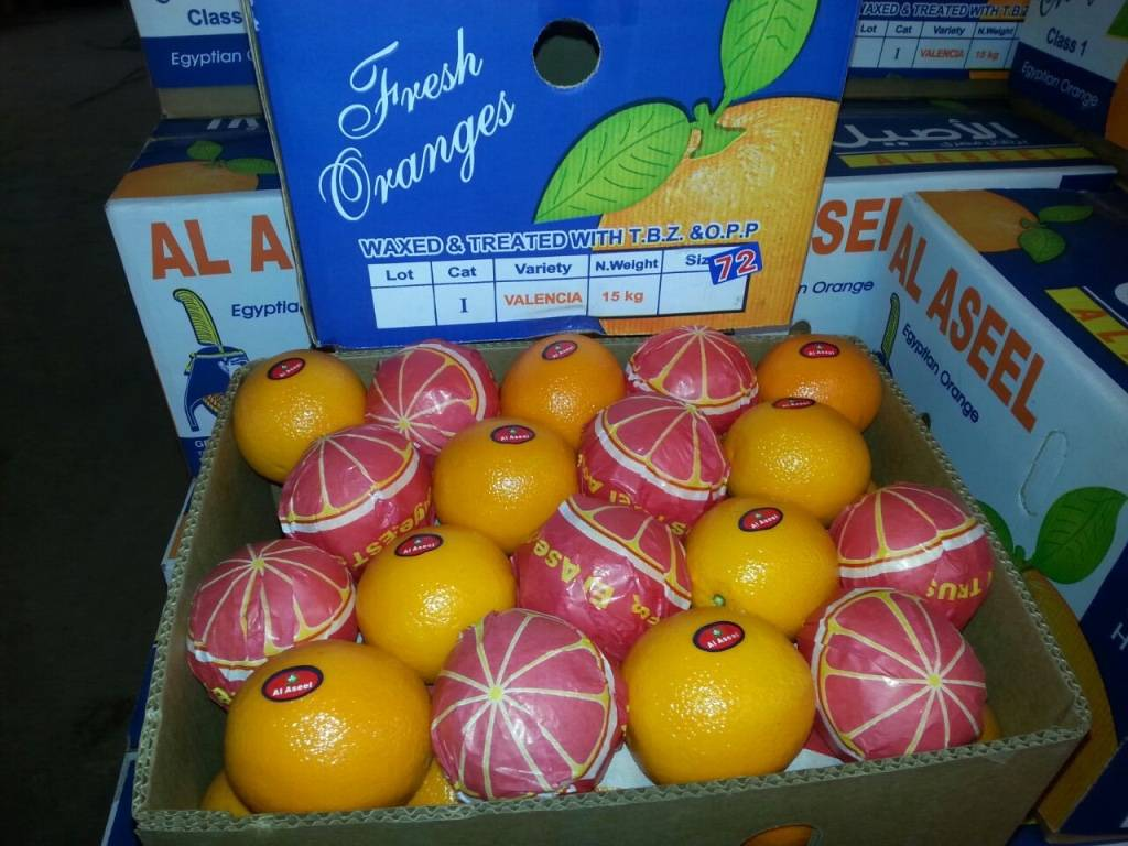 DIFFERENT TYPES OF FRESH ORANGES
