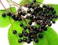 Elderberry Extract(Sambucus nigra L.)