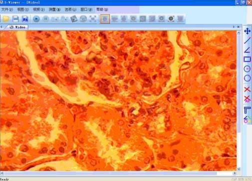 microscope software microscopic software