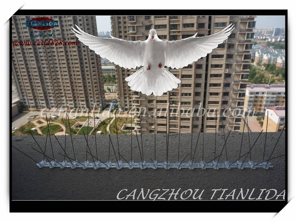 bird spike, Steel Anti Bird Spike For Sale