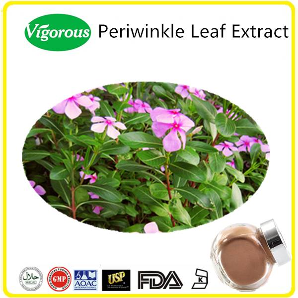 High quality Periwinkle Leaf Extract Powder Vinpocetine