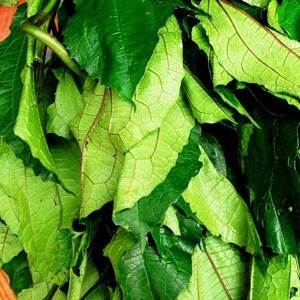 Vegetables (DRIED UGU LEAF)