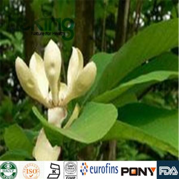 Magnolia officinalis P.E.