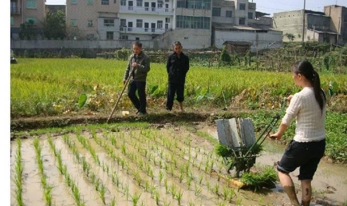 2015 2 rows hand crank rice transplanter, manual paddy planter, rice seeder machine