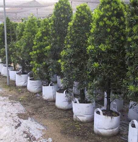 Grow bag pot