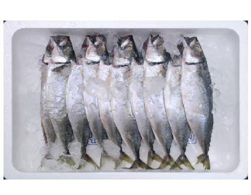 Solted Mackerel