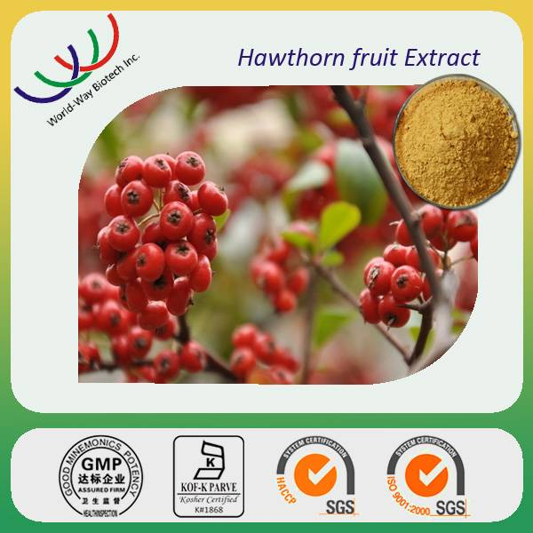 free sample GMP HACCP KOF-K China manufacturer pure natural plant flavone hawthorn berry extract
