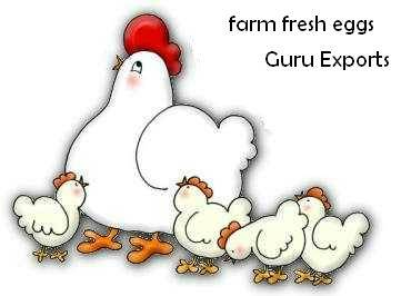 FARM BROWN EGG EXPORT OF INDIA