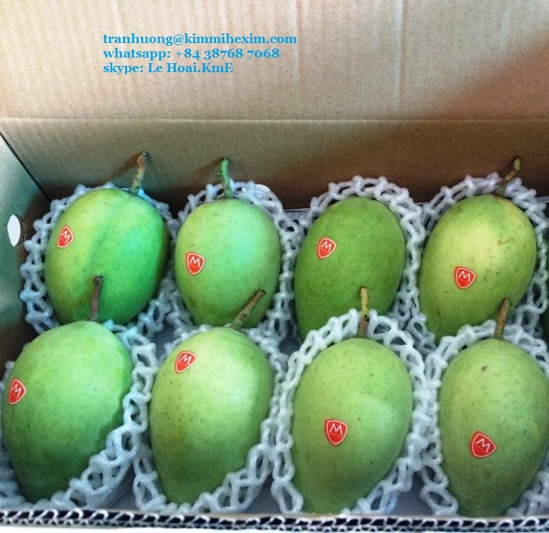 FRESH MANGO VIET NAM WITH HIGH QUALITY
