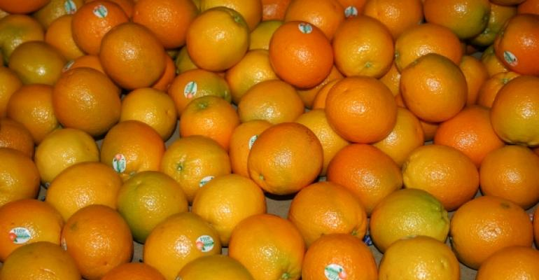Fresh Valencia and Naval Oranges