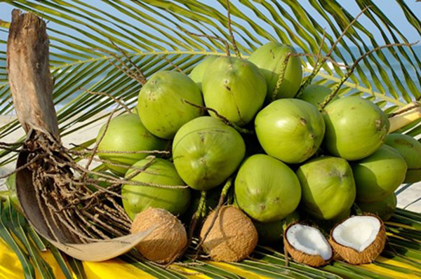 Best Price For Coconut (+841214627828)