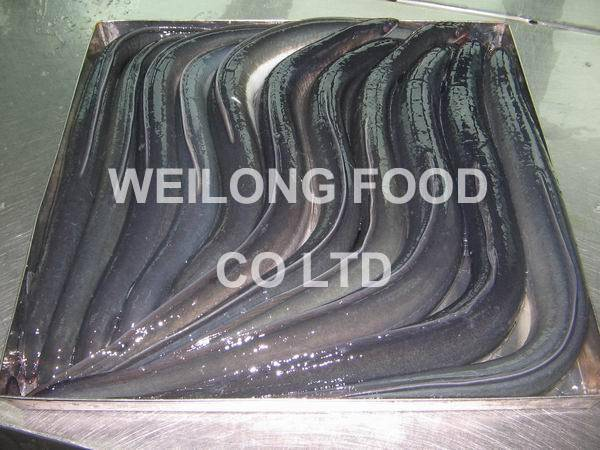 Supply Frozen Gutted Eel(A.Anguilla/Japonica)