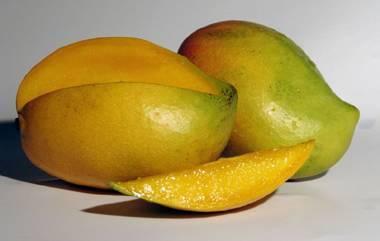 we export fresh mango fruit