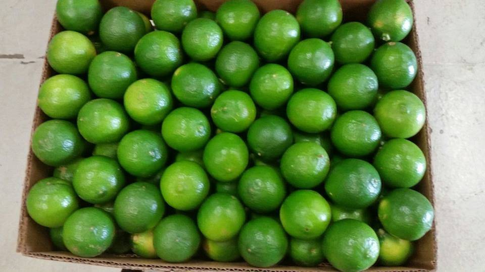Fresh Lime with seed