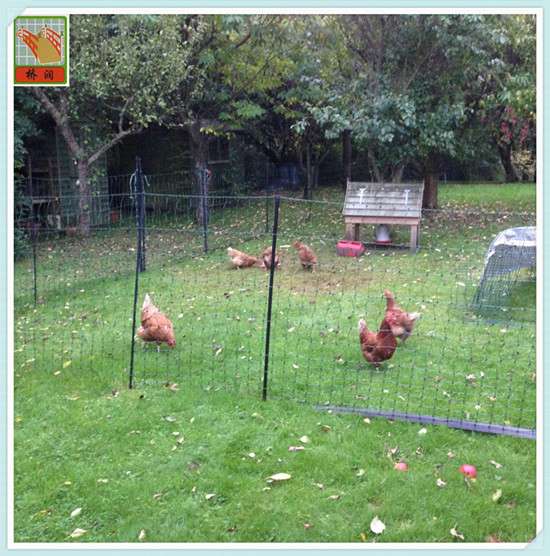 poultry plastic netting