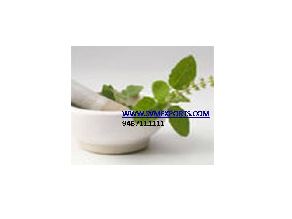 Tulsi Pure Leaves Exporters India