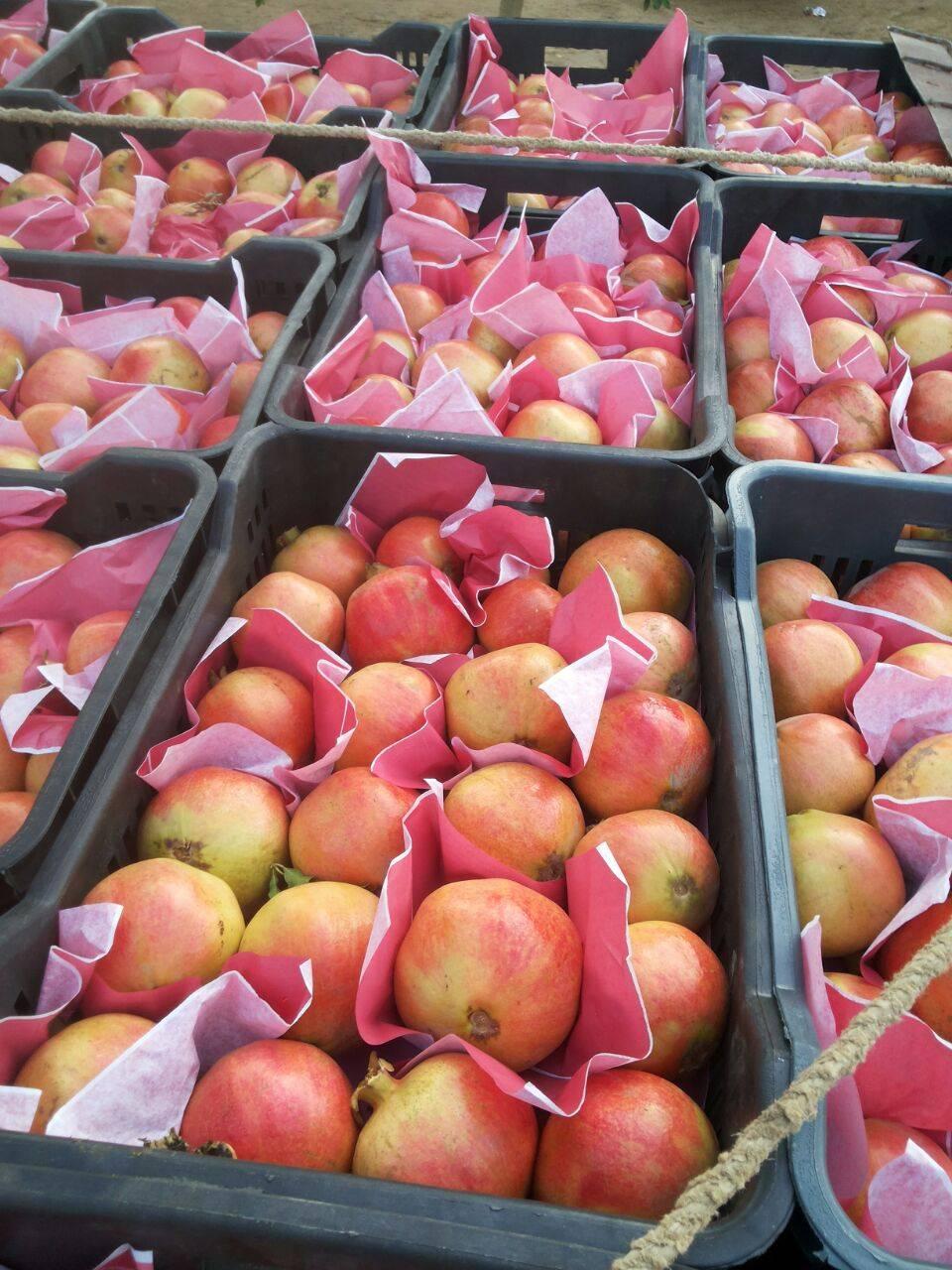 Fresh pomegrante