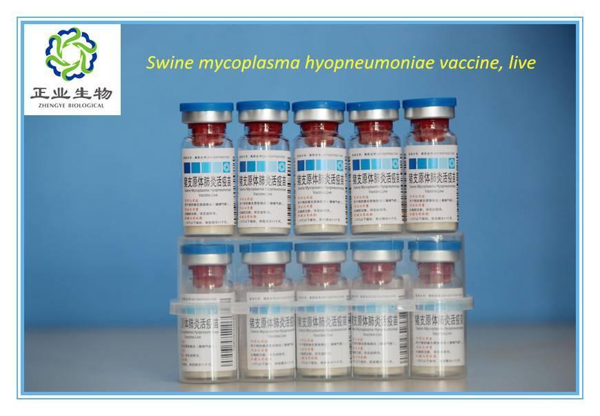 Swine Mycoplasma Hyopneumonia Vaccine, Live