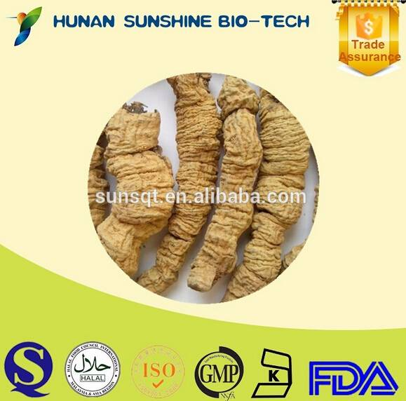 Original Chinese herb Radix moridae officinalls dried root exporter