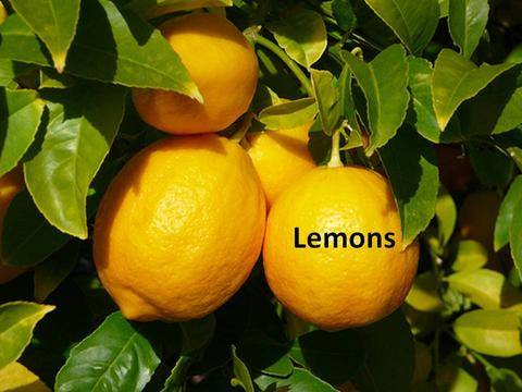 Fresh Lemons available in Stock