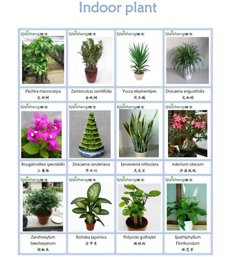 Sell all kinds of indoor plant