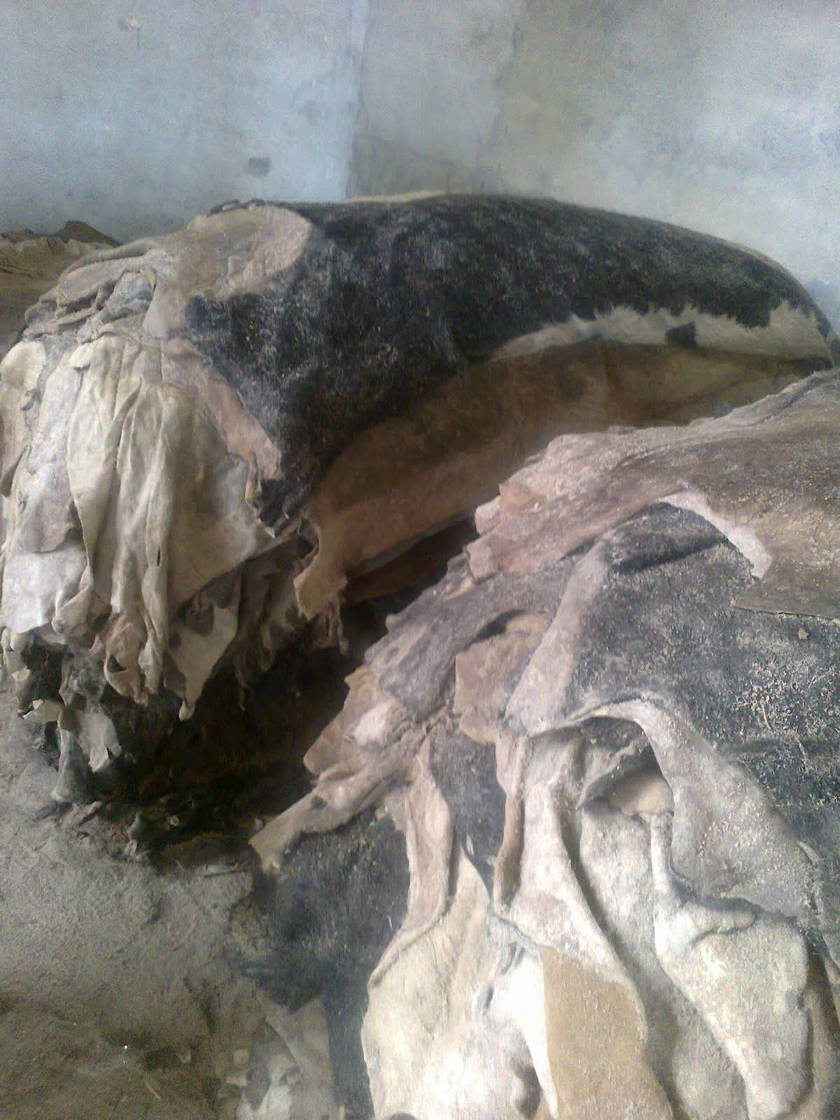wet and dry Salted Cow/Animal Hides Skin