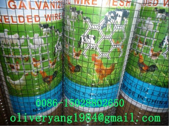 wire mesh-Welded Wire Mesh