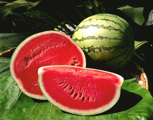 Fresh sweet water melon