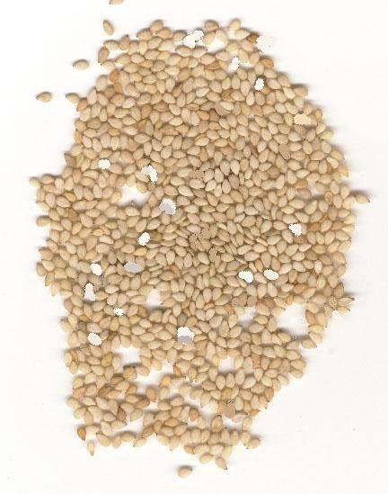 Chinese white sesame seed