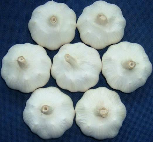 Garlic P.E, hot sell