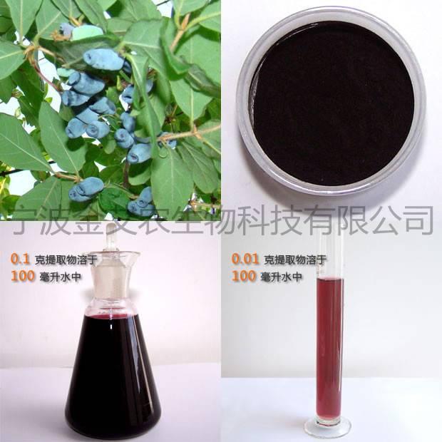 Blue Honeysuckle Extract